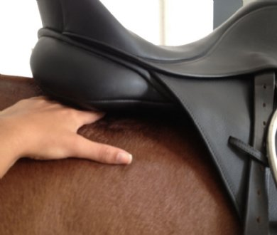 Local English Saddle Fit Evaluation / Barn Call - Virginia